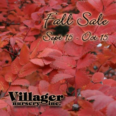 Fall Sale Mt.Ash 2017