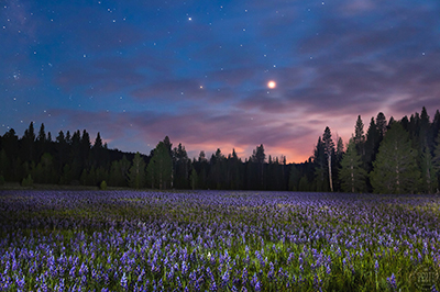 Gallery Image Sagehen_Meadow_at_Night_400.jpg