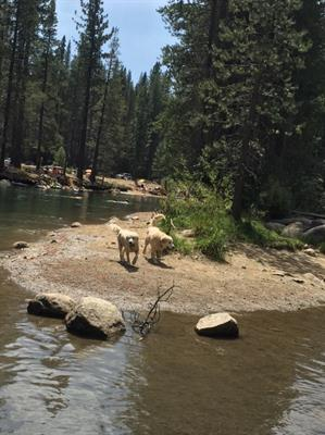 More dog fun at Donner Lake