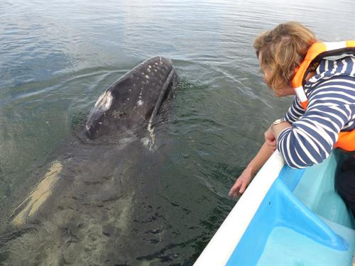 Up close with whales in Baja