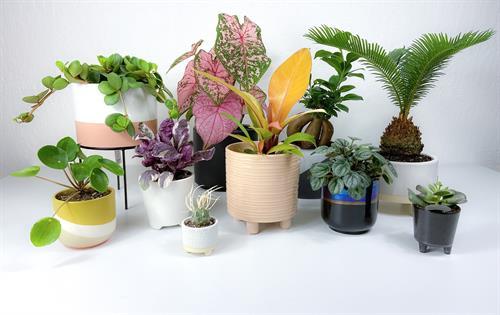 Plants & Pots Combos