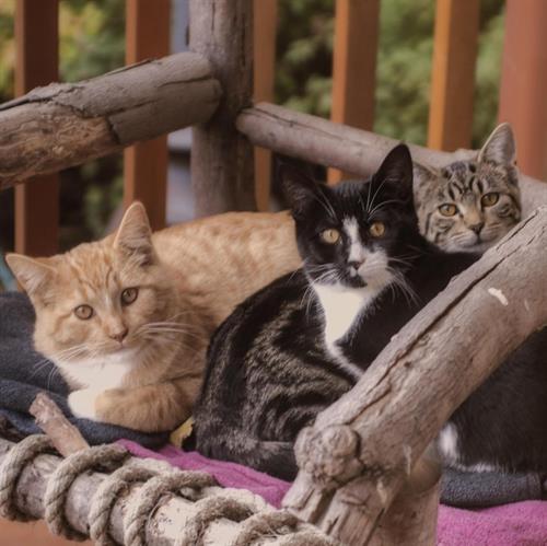 Gallery Image cats2.jpg