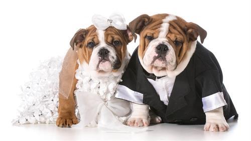 Gallery Image dog-wedding-4.jpg