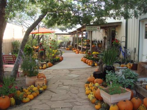 We have lots of ideas for your fall landscape