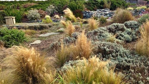 Low maintenance hillside plantings.