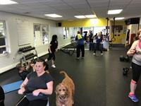 Metabolic Class with our furry trainer keeping a close eye on everyone!