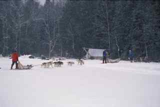 Dog sledding into a traditional winter camp