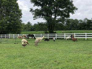 H.O.P.E.-full Pastures Therapeutic Farm