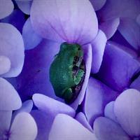 Gallery Image DSCF2022_(2).jpg