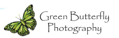 Green Butterfly Photography