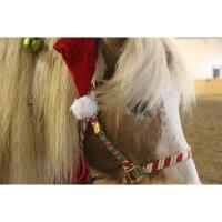 Christmas in July with Rocky the Therapy Horse