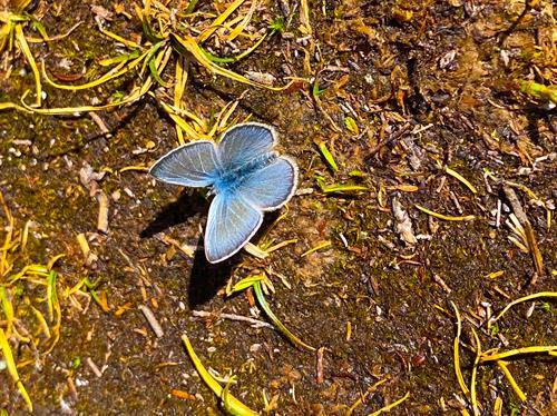 Feature Grant: BioBlitz- Whistler Naturalists