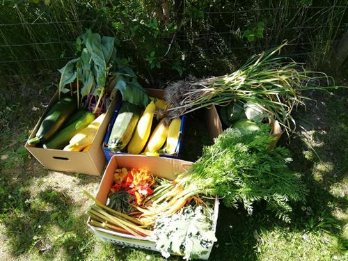 Feature Grant: Feasting for Change- Stewardship Pemberton Society