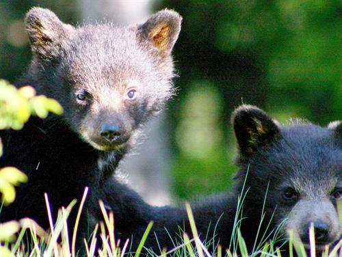 Whistler Wildlife on tour!