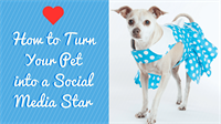 Three Girls Media: How to Turn Your Lovable Pet into a Social Media Star
