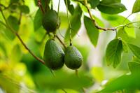 Three Girls Media: 4 Excellent PR Lessons From Growing An Avocado Tree