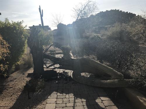 Cactus down