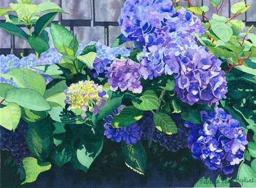 """Hydrangeas Against the Shed"""
