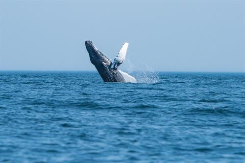 Wale Watching Tour