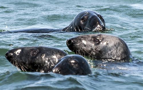 Gallery Image Blue_Claw_Seals_Cropped_Hi_Res.jpg