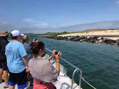 Seal Colony in Chatham Harbor