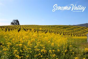 Sonoma Valley Visitors Bureau