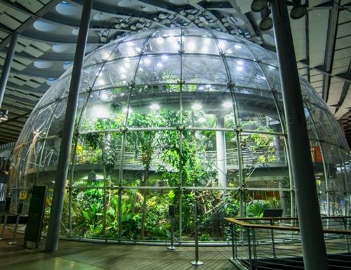 Osher Rainforest - a lush, four-story rainforest that's teeming with life