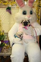 Pet Photos with the Easter Bunny 2017