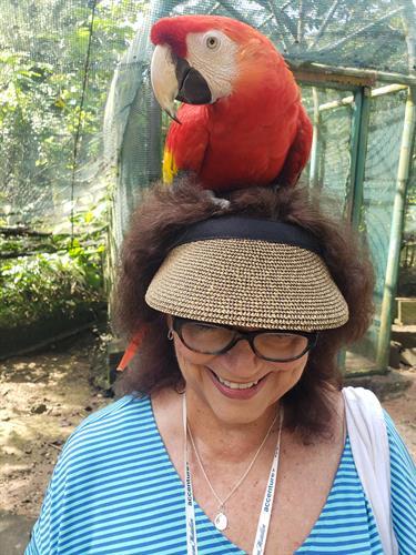 jamaica rainforest