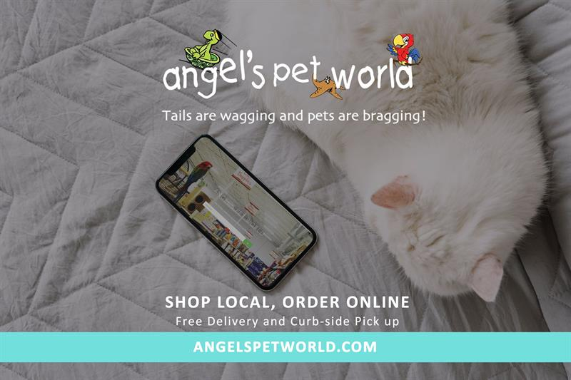 Shop Online or in store!