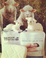 St. Dormeir wool protector