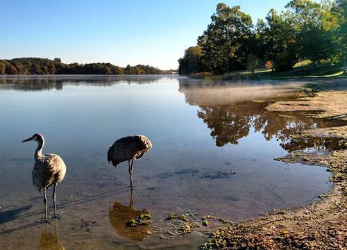 Sandhill cranes at Kent Lake Beach