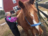 Brighton Rec Horse Stables