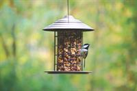 Seed cylinders are a great food to serve so you can enjoy longer views of the birds.