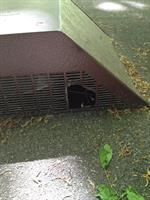 Squirrel chew through roof vent