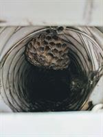 Wasps built nests inside exhaust vent