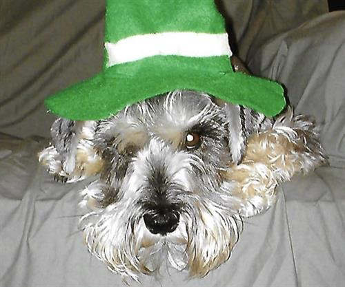 Muffy showing her St. Patrick's Day spirit.