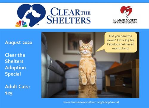 #2020cleartheshelters Adult Cat Adoption Fee $25 Entire Month of August, 2020