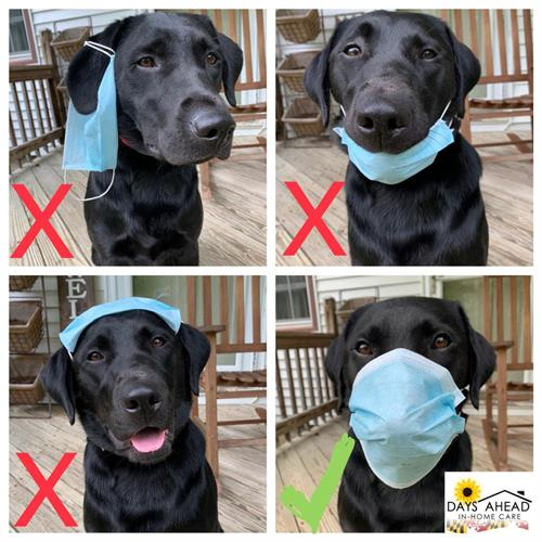 Willow, showing you how to properly wear your mask!