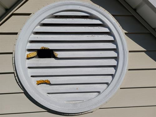 Squirrels chewed through the gable vent