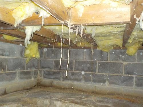 Termite Shelter tubes hanging from the floor joists