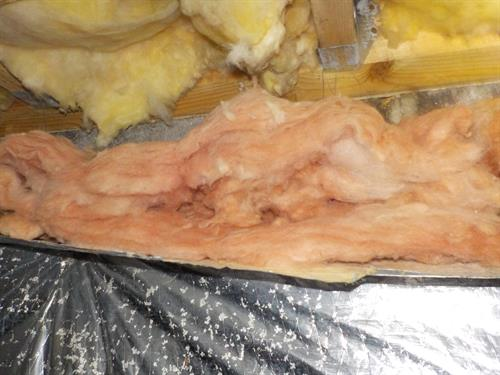 Mice nesting and destroying the insulation