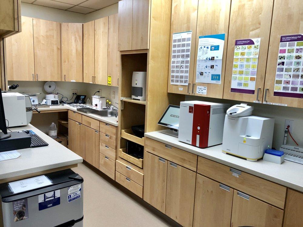 Our Lab Ara!