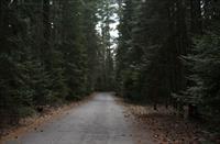 Drive Into AJ's Pine Crest Hideaway