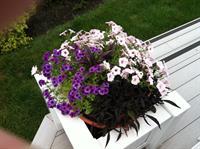 Hampton; fine gardening