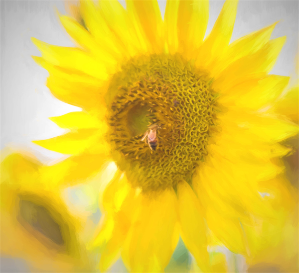 Soft Sunflower and Bee by Natalie Rotman Cote