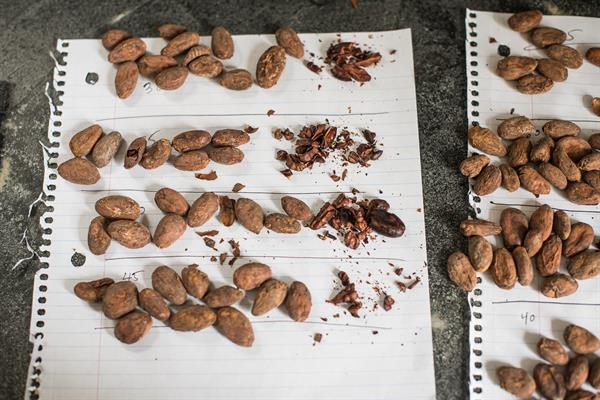 the roast profile is a critical part of flavor: we spend months testing and developing our approach to each origin
