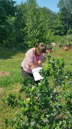 Farmer Sarah picking fresh blueberries