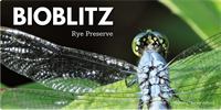 National Public Lands Day BioBlitz