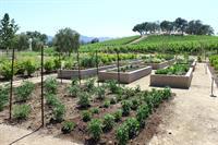 Chefs Garden